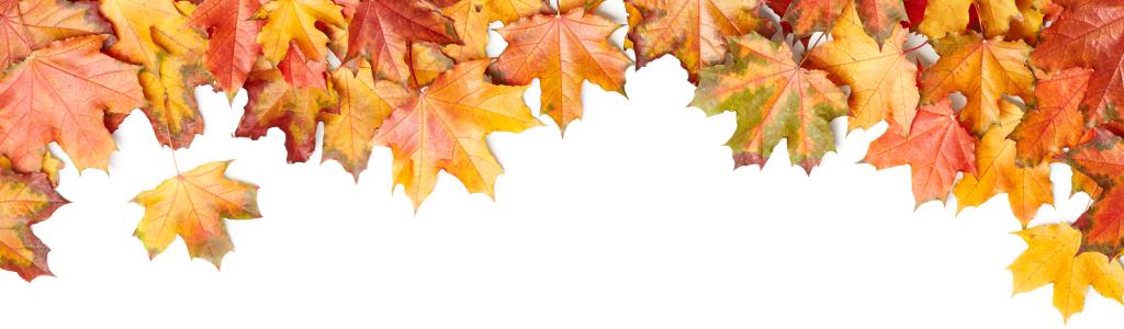 Multi-colored fall leaves