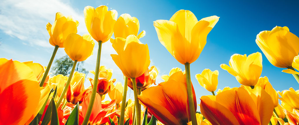 Spring means tulips and special offerings from Conference & Event Services.