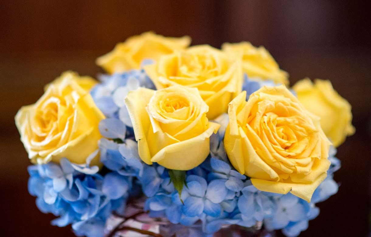Maize and Blue roses.